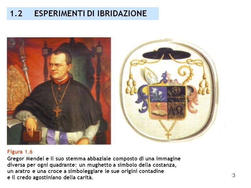 3 Figura 1.6 Gregor Mendel e il suo stemma abbaziale composto di una immagine diversa per ogni quadrante: un mughetto a simbolo della costanza, un ara