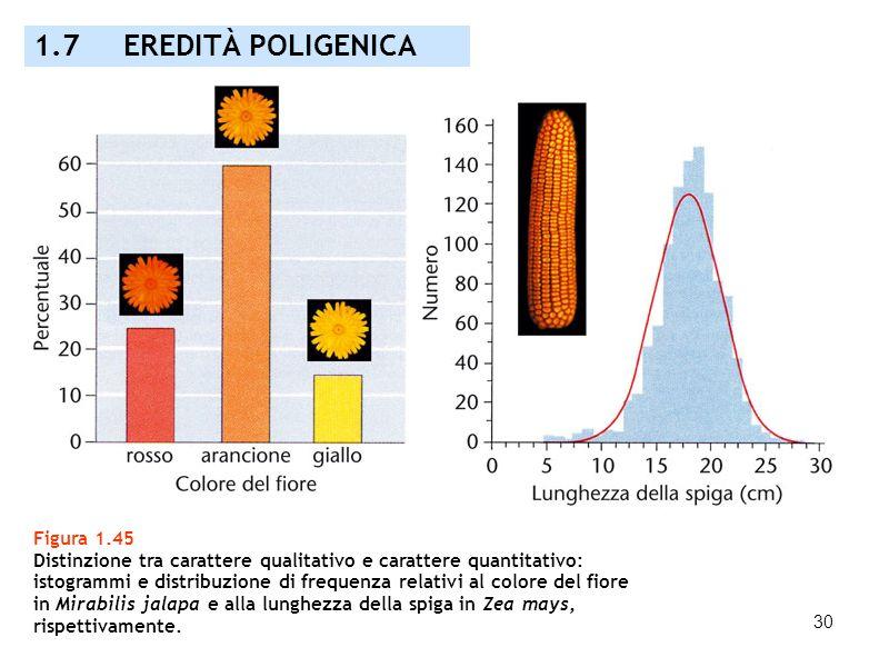 30 Figura 1.45 Distinzione tra carattere qualitativo e carattere quantitativo: istogrammi e distribuzione di frequenza relativi al colore del fiore in