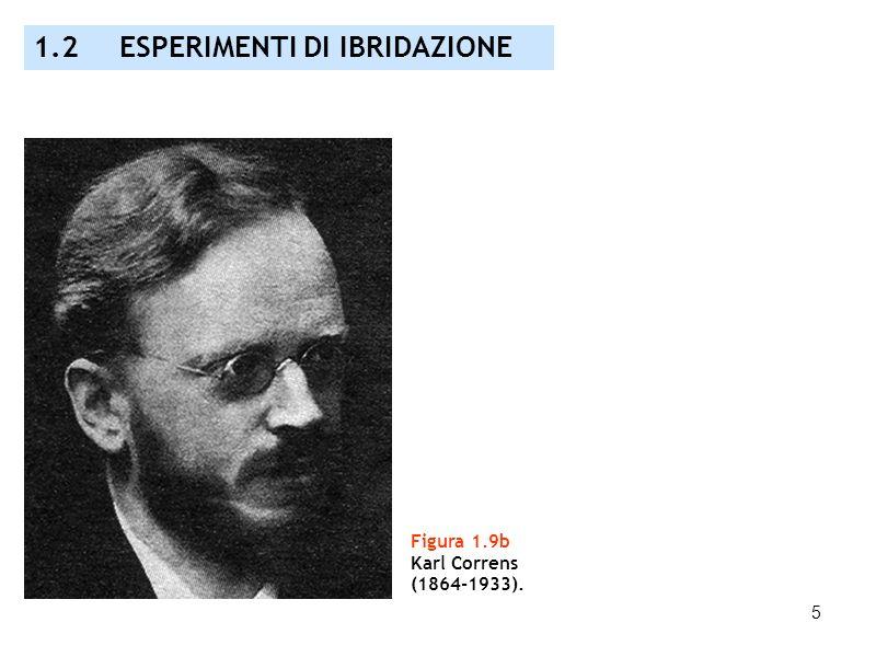 5 Figura 1.9b Karl Correns (1864-1933). 1.2 ESPERIMENTI DI IBRIDAZIONE