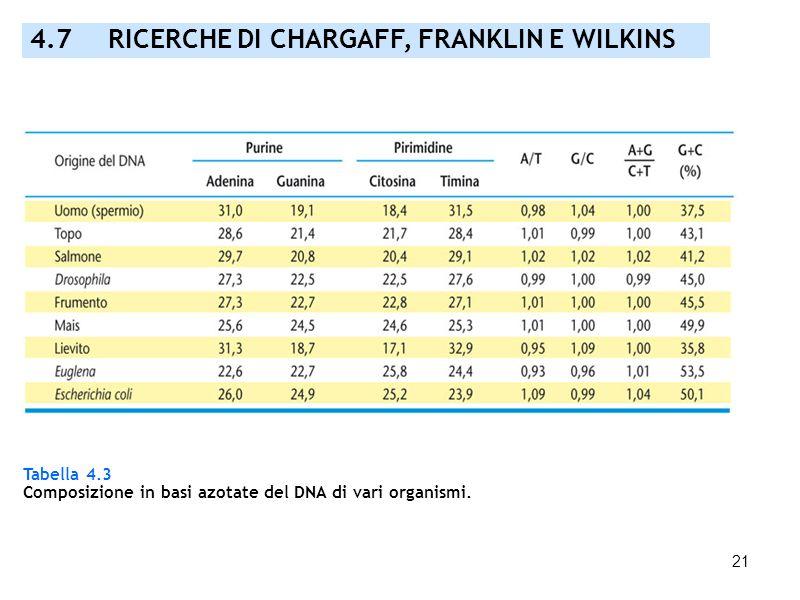 21 Tabella 4.3 Composizione in basi azotate del DNA di vari organismi. 4.7 RICERCHE DI CHARGAFF, FRANKLIN E WILKINS
