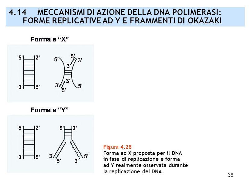 38 Figura 4.28 Forma ad X proposta per il DNA in fase di replicazione e forma ad Y realmente osservata durante la replicazione del DNA. 4.14 MECCANISM