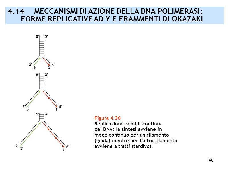 40 Figura 4.30 Replicazione semidiscontinua del DNA: la sintesi avviene in modo continuo per un filamento (guida) mentre per laltro filamento avviene