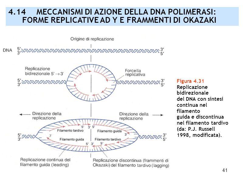 41 Figura 4.31 Replicazione bidirezionale del DNA con sintesi continua nel filamento guida e discontinua nel filamento tardivo (da: P.J. Russell 1998,