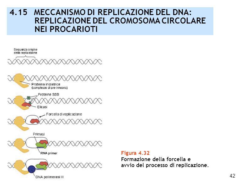 42 Figura 4.32 Formazione della forcella e avvio del processo di replicazione. 4.15 MECCANISMO DI REPLICAZIONE DEL DNA: REPLICAZIONE DEL CROMOSOMA CIR