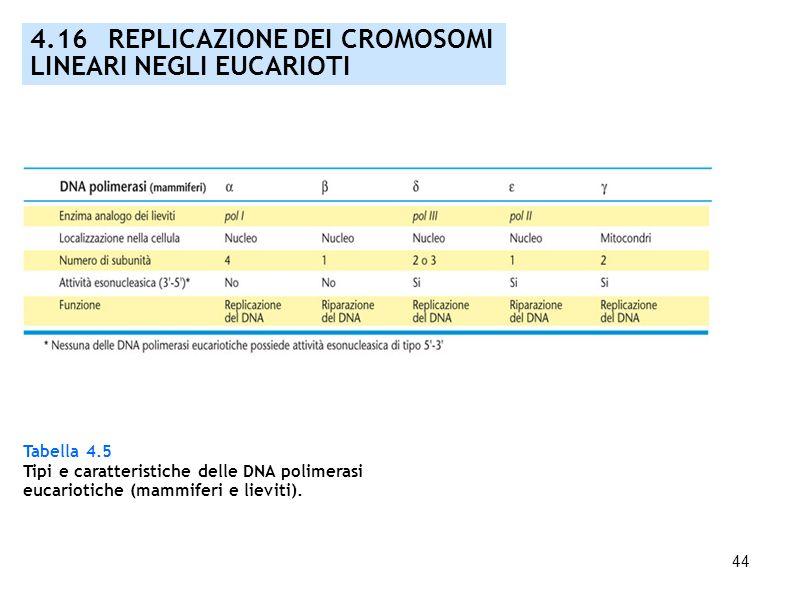 44 4.16 REPLICAZIONE DEI CROMOSOMI LINEARI NEGLI EUCARIOTI Tabella 4.5 Tipi e caratteristiche delle DNA polimerasi eucariotiche (mammiferi e lieviti).