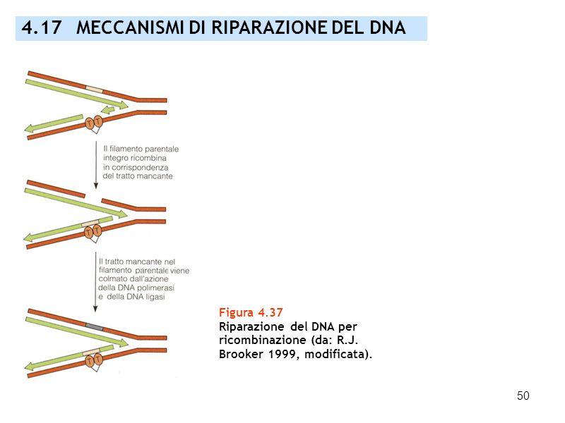 50 4.17 MECCANISMI DI RIPARAZIONE DEL DNA Figura 4.37 Riparazione del DNA per ricombinazione (da: R.J. Brooker 1999, modificata).