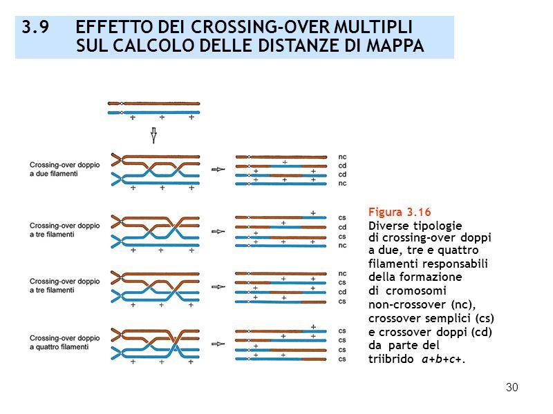 30 3.9 EFFETTO DEI CROSSING-OVER MULTIPLI SUL CALCOLO DELLE DISTANZE DI MAPPA Figura 3.16 Diverse tipologie di crossing-over doppi a due, tre e quattr
