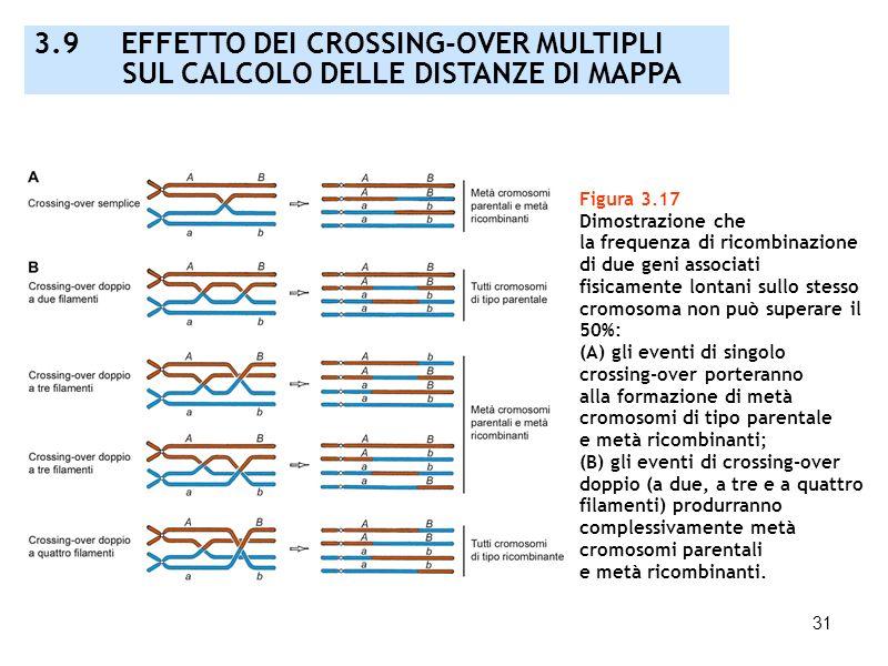 31 Figura 3.17 Dimostrazione che la frequenza di ricombinazione di due geni associati fisicamente lontani sullo stesso cromosoma non può superare il 5