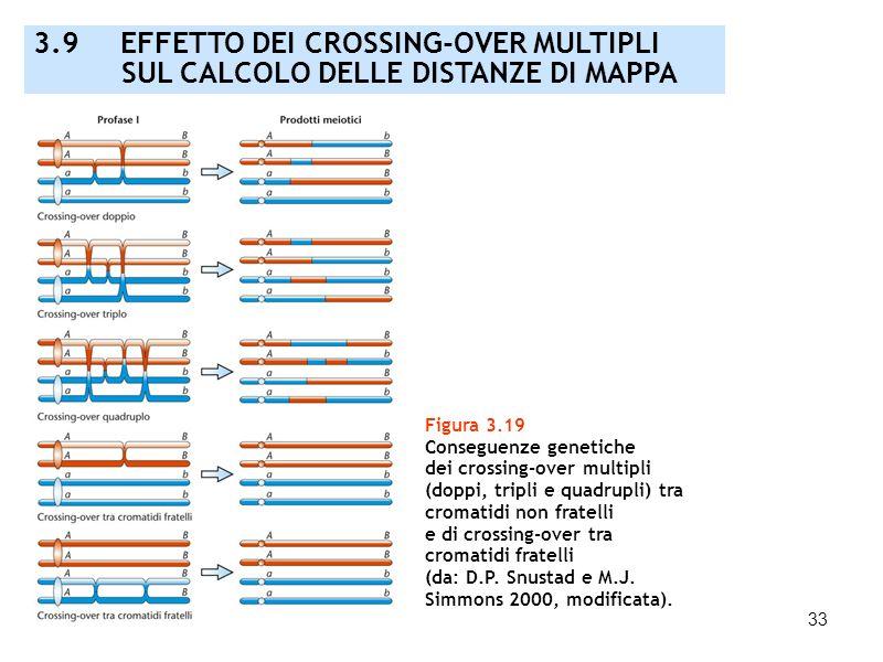 33 Figura 3.19 Conseguenze genetiche dei crossing-over multipli (doppi, tripli e quadrupli) tra cromatidi non fratelli e di crossing-over tra cromatid