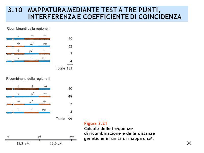 36 Figura 3.21 Calcolo delle frequenze di ricombinazione e delle distanze genetiche in unità di mappa o cM. 3.10 MAPPATURA MEDIANTE TEST A TRE PUNTI,