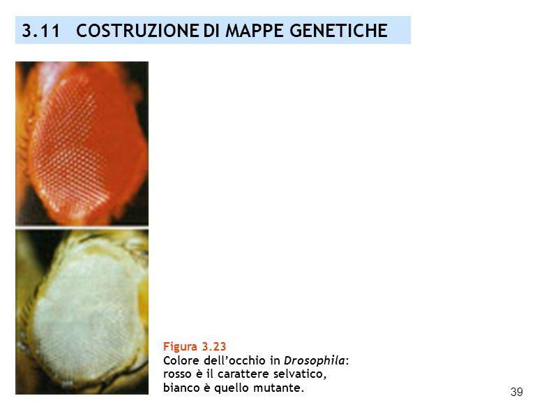 39 3.11 COSTRUZIONE DI MAPPE GENETICHE Figura 3.23 Colore dellocchio in Drosophila: rosso è il carattere selvatico, bianco è quello mutante.
