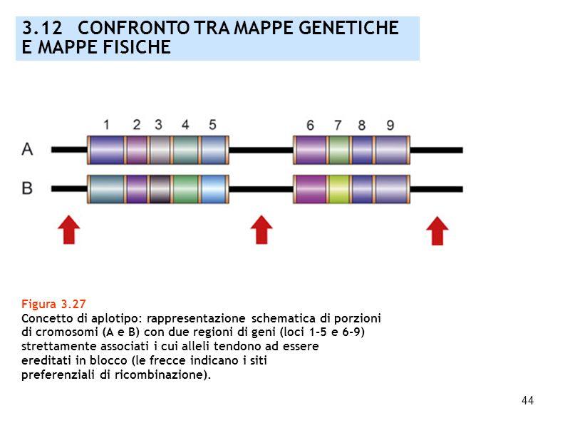 44 Figura 3.27 Concetto di aplotipo: rappresentazione schematica di porzioni di cromosomi (A e B) con due regioni di geni (loci 1-5 e 6-9) strettament