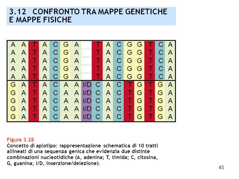 45 Figura 3.28 Concetto di aplotipo: rappresentazione schematica di 10 tratti allineati di una sequenza genica che evidenzia due distinte combinazioni