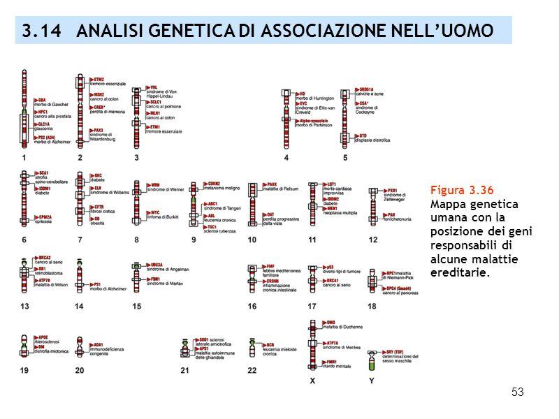 53 Figura 3.36 Mappa genetica umana con la posizione dei geni responsabili di alcune malattie ereditarie. 3.14 ANALISI GENETICA DI ASSOCIAZIONE NELLUO