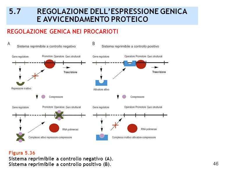46 Figura 5.36 Sistema reprimibile a controllo negativo (A). Sistema reprimibile a controllo positivo (B). REGOLAZIONE GENICA NEI PROCARIOTI 5.7 REGOL