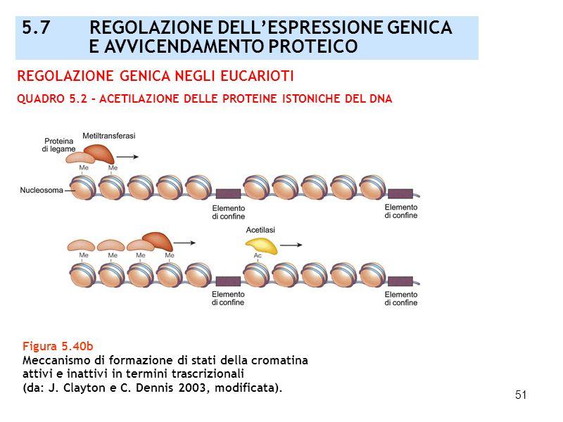 51 Figura 5.40b Meccanismo di formazione di stati della cromatina attivi e inattivi in termini trascrizionali (da: J. Clayton e C. Dennis 2003, modifi