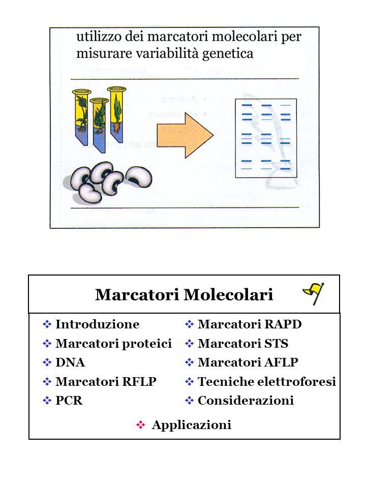 Marcatori Molecolari Introduzione Marcatori proteici DNA Marcatori RFLP PCR Marcatori RAPD Marcatori STS Marcatori AFLP Tecniche elettroforesi Conside