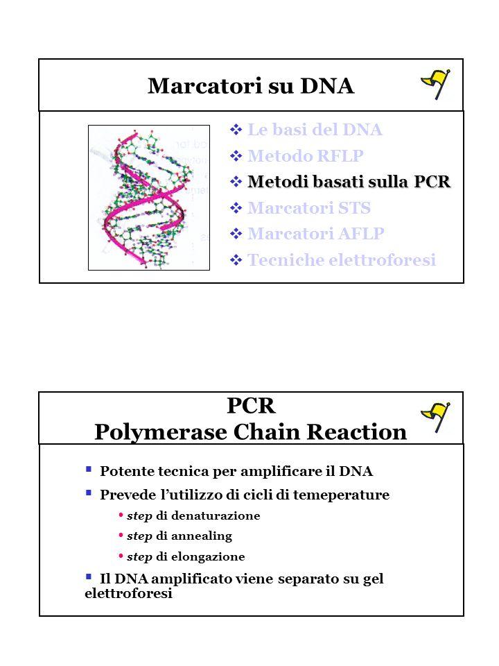 Marcatori su DNA Le basi del DNA Metodo RFLP Metodi basati sulla PCR Marcatori STS Marcatori AFLP Tecniche elettroforesi PCR Polymerase Chain Reaction
