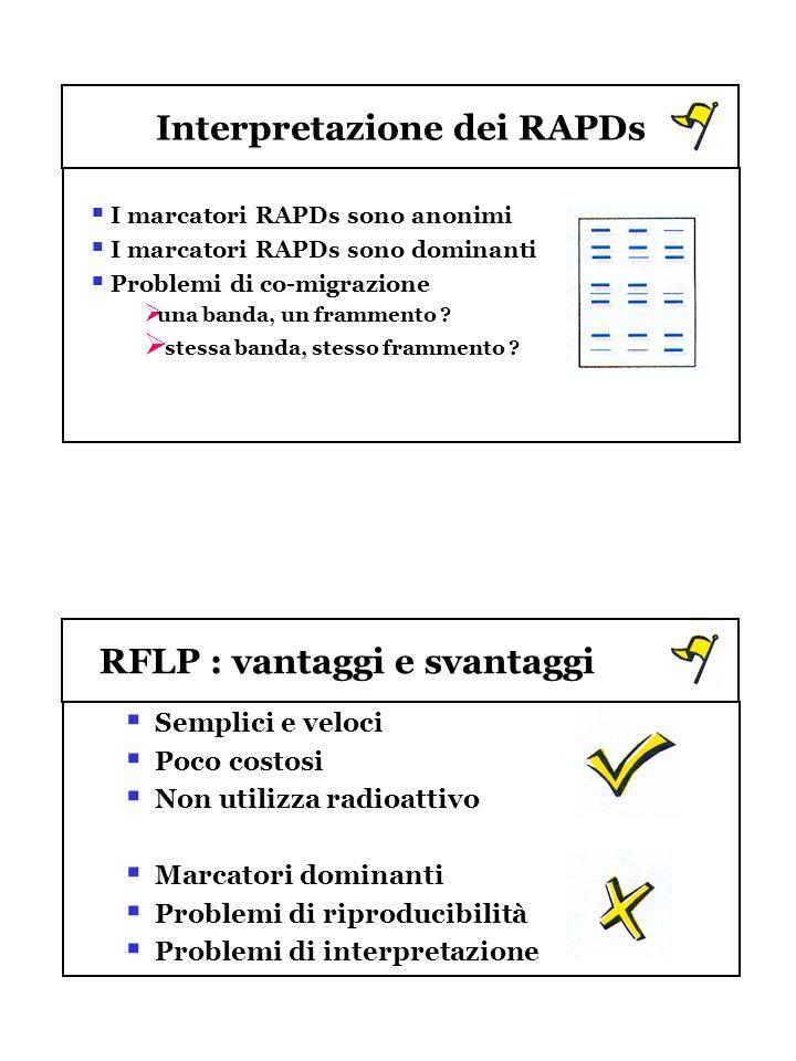 Interpretazione dei RAPDs I marcatori RAPDs sono anonimi I marcatori RAPDs sono dominanti Problemi di co-migrazione una banda, un frammento ? stessa b