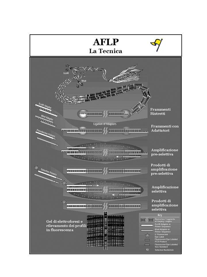 AFLP La Tecnica