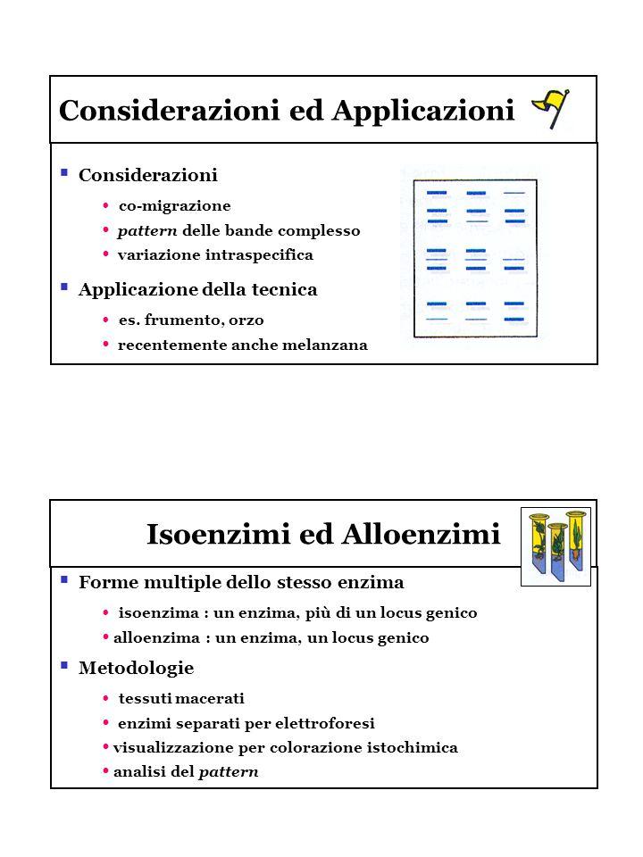 Considerazioni ed Applicazioni Considerazioni co-migrazione pattern delle bande complesso variazione intraspecifica Applicazione della tecnica es. fru
