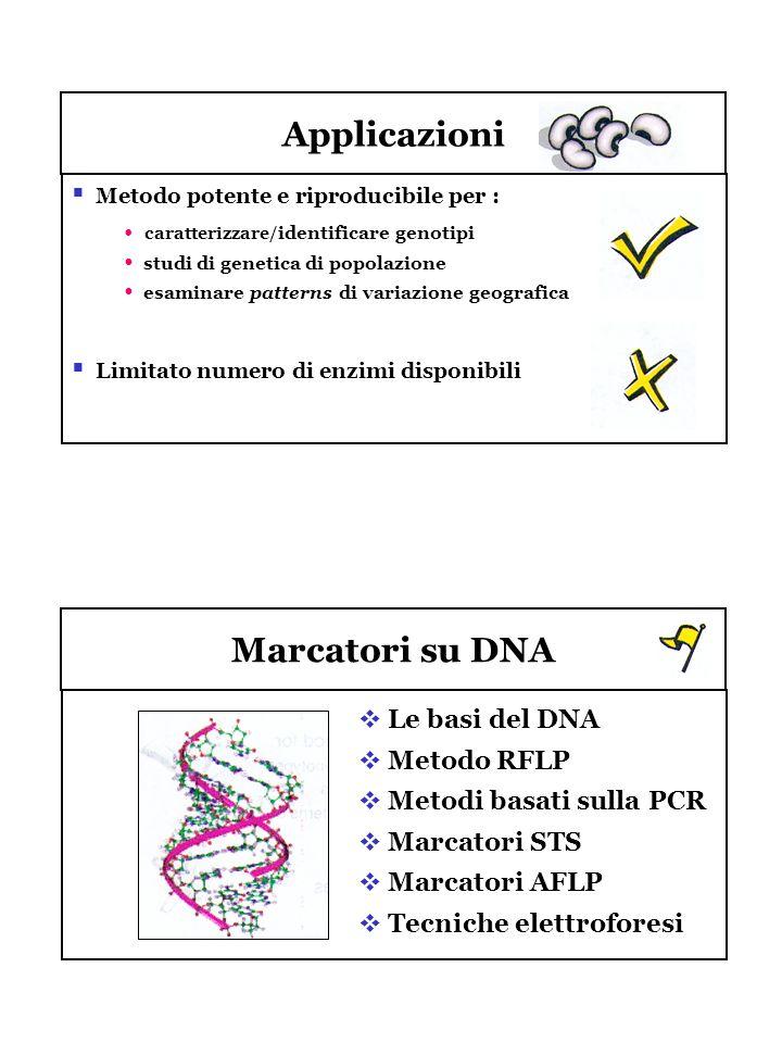 Applicazioni Marcatori su DNA Metodo potente e riproducibile per : caratterizzare/ identificare genotipi studi di genetica di popolazione esaminare pa