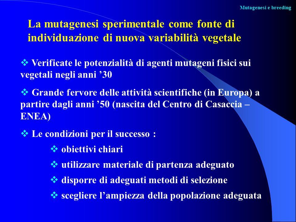 Mutagenesi e breeding Verificate le potenzialità di agenti mutageni fisici sui vegetali negli anni 30 Grande fervore delle attività scientifiche (in E