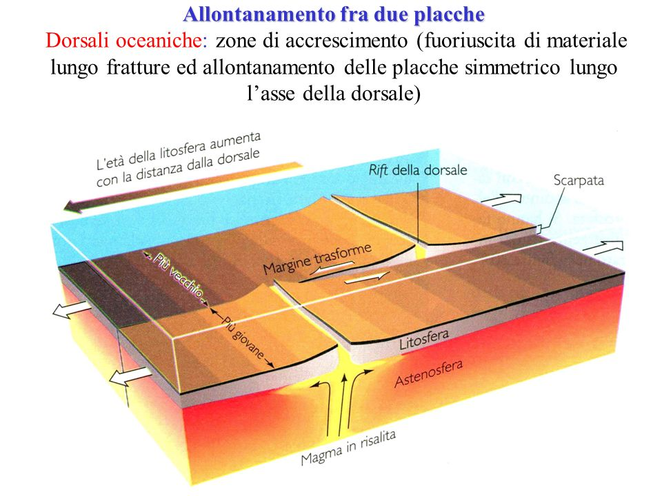 Allontanamento fra due placche Allontanamento fra due placche Dorsali oceaniche: zone di accrescimento (fuoriuscita di materiale lungo fratture ed allontanamento delle placche simmetrico lungo lasse della dorsale)