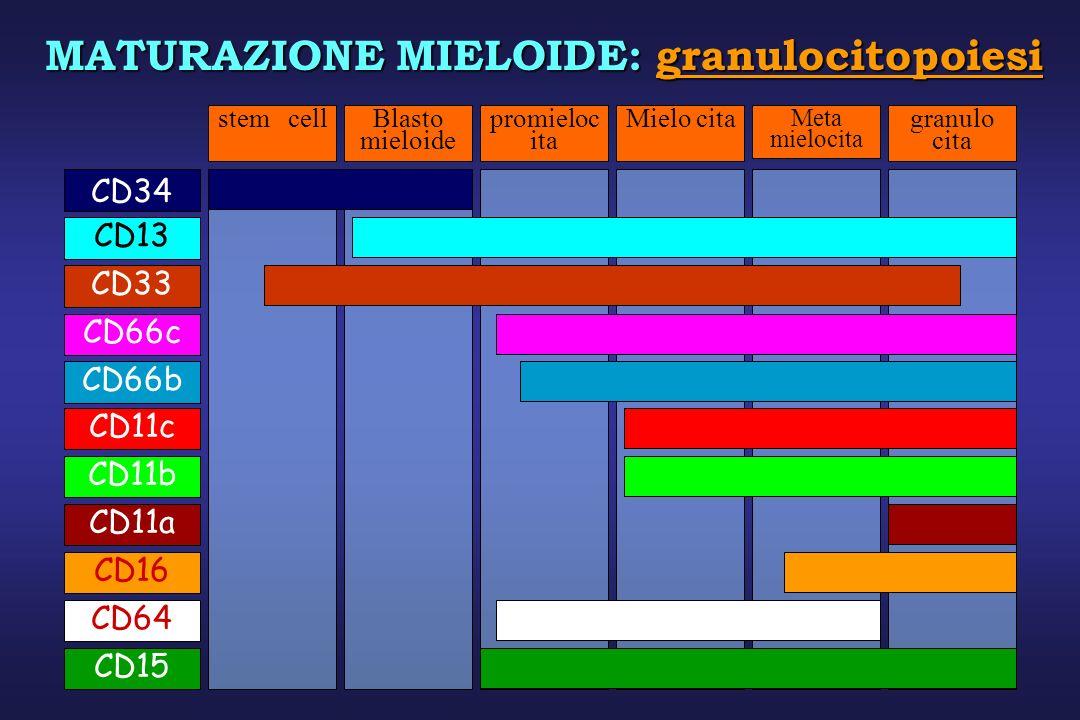 MATURAZIONE MIELOIDE: granulocitopoiesi stem cellBlasto mieloide promieloc ita Mielo citagranulo cita CD66cCD13CD11bCD11aCD66bCD11cCD16CD64 Meta mielo