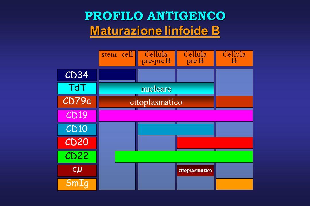 CD19 nucleare TdTCD22 citoplasmatico cµ CD10CD20 CD34 stem cellCellula pre-pre B Cellula pre B Cellula B citoplasmatico CD79a SmIg PROFILO ANTIGENCO M