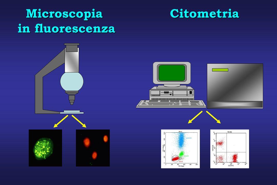 Citometria a Flusso (CFM) La CFM consente lanalisi automatica di sospensioni cellulari monodisperse, misurandone le caratteristiche fisiche e/o biochimiche allinterno di un flusso laminare che interseca una sorgente di eccitazione