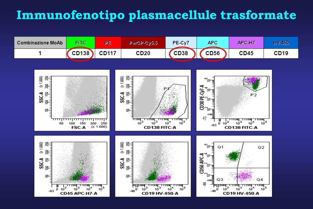 Combinazione MoAbFITCPEPerCP-Cy5.5PE-Cy7APCAPC-H7HV-450 1CD138CD117CD20CD38CD56CD45CD19 Immunofenotipo plasmacellule trasformate