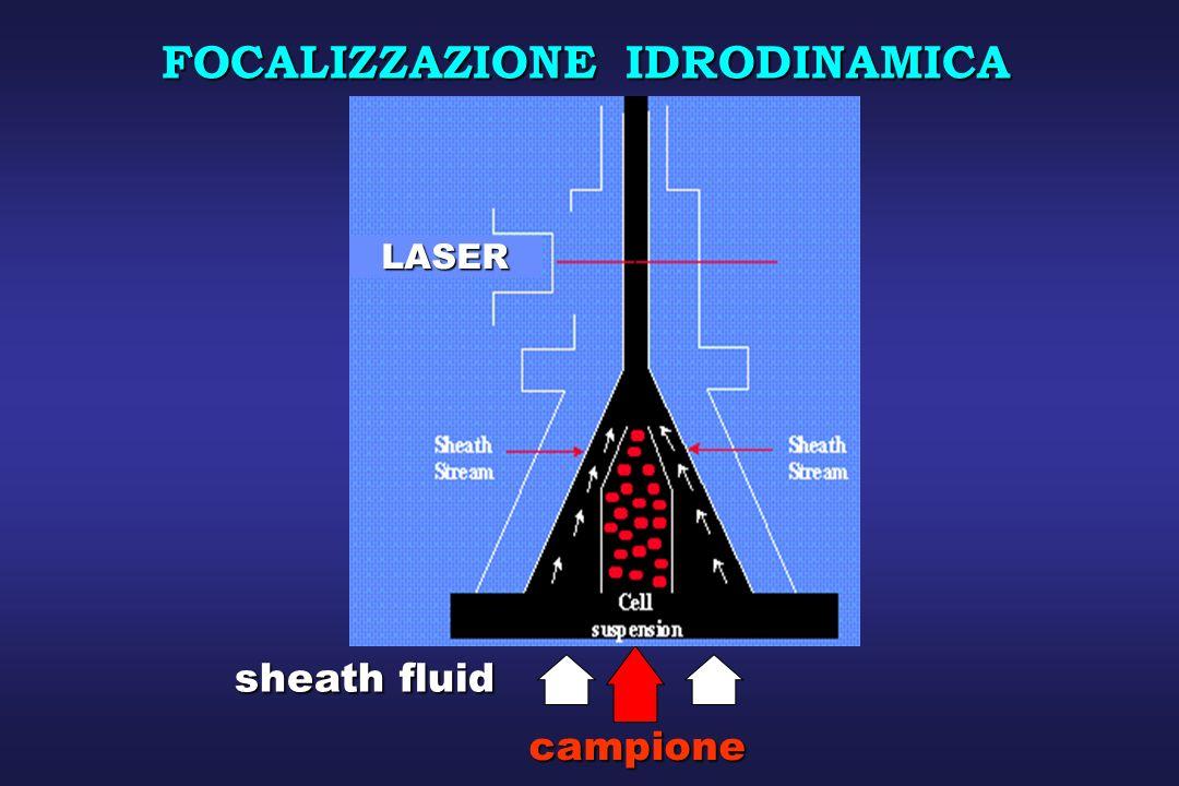 Diffrazione: proporzionale alle dimensioni della cellula rilevata lungo lasse della luce incidente 0° Rifrazione & Riflessione: proporzionale alla granularità cellulare e alla complessità rilevate a 90° rispetto la luce incidente.