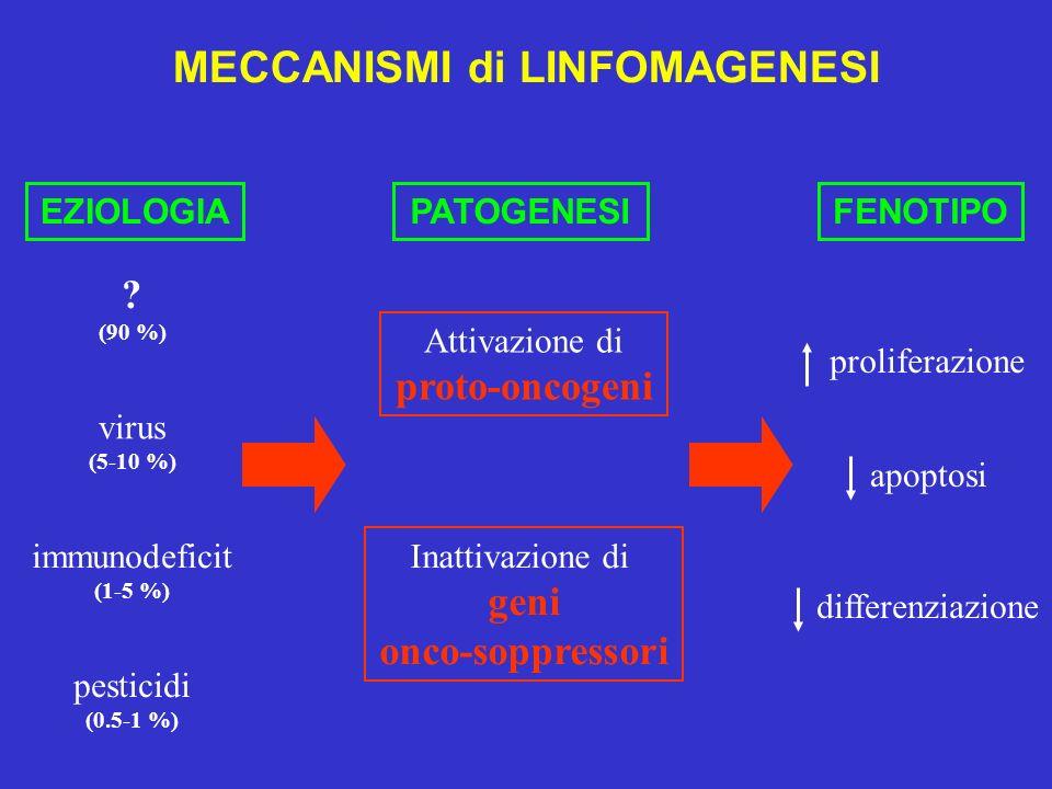 MECCANISMI di LINFOMAGENESI EZIOLOGIAPATOGENESIFENOTIPO Attivazione di proto-oncogeni Inattivazione di geni onco-soppressori proliferazione apoptosi d
