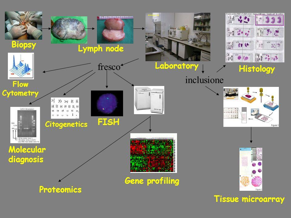 fresco inclusione Gene profiling Tissue microarray FISH Citogenetics Flow Cytometry Molecular diagnosis Histology Biopsy Lymph node Laboratory Proteom