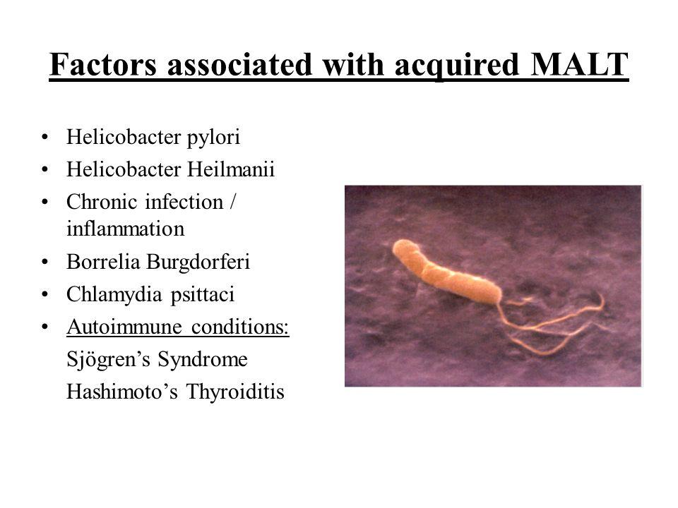 Factors associated with acquired MALT Helicobacter pylori Helicobacter Heilmanii Chronic infection / inflammation Borrelia Burgdorferi Chlamydia psitt