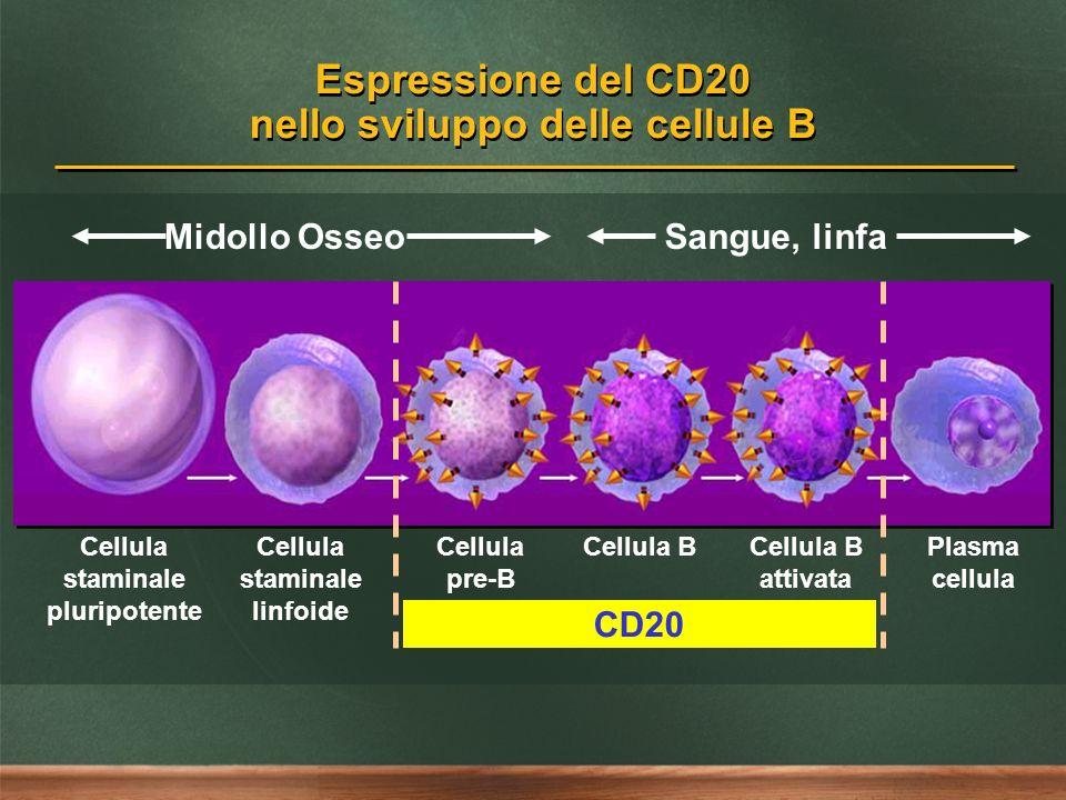 Espressione del CD20 nello sviluppo delle cellule B Cellula staminale pluripotente Cellula staminale linfoide Cellula pre-B Cellula BCellula B attivat
