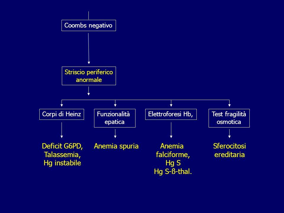 Coombs negativo Striscio periferico anormale Corpi di HeinzFunzionalità epatica Elettroforesi Hb,Test fragilità osmotica Deficit G6PD, Talassemia, Hg