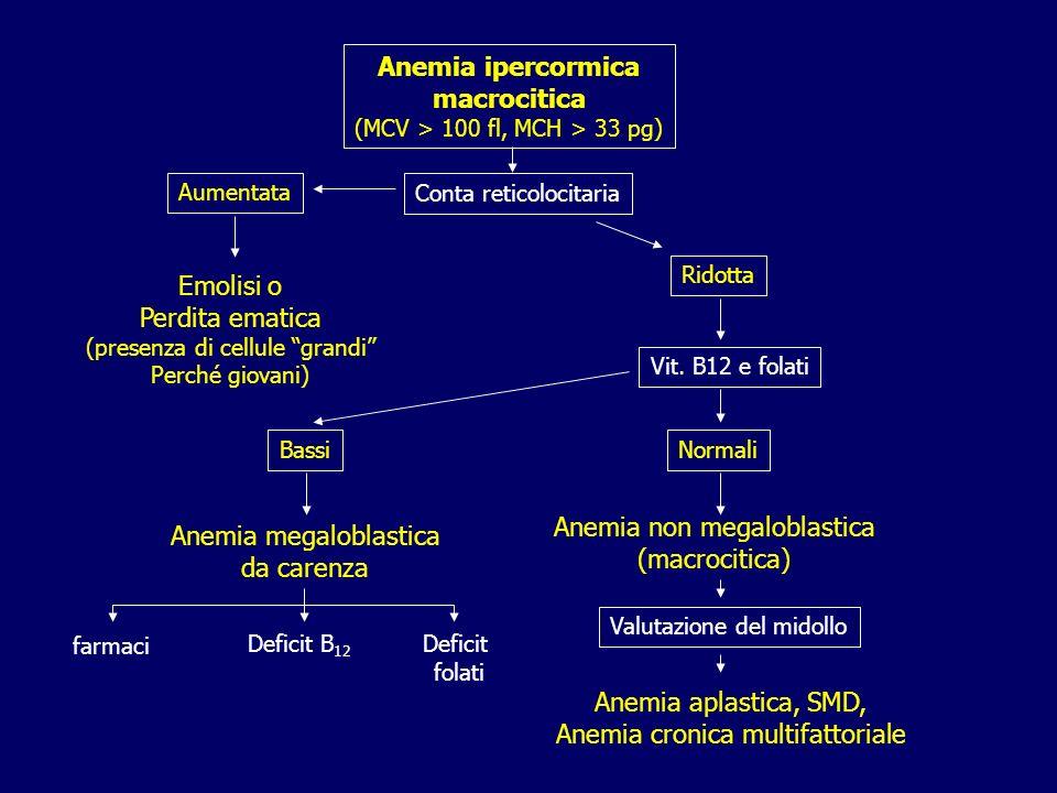 Anemia ipercormica macrocitica (MCV > 100 fl, MCH > 33 pg) Aumentata Ridotta Vit. B12 e folati Emolisi o Perdita ematica (presenza di cellule grandi P