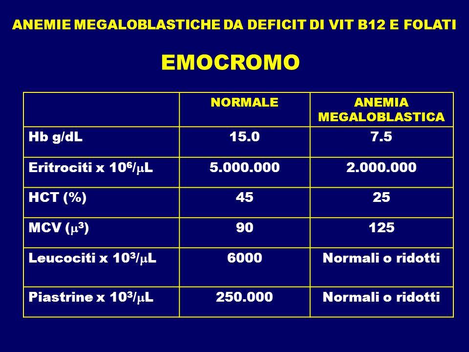 ANEMIE MEGALOBLASTICHE DA DEFICIT DI VIT B12 E FOLATI EMOCROMO NORMALEANEMIA MEGALOBLASTICA Hb g/dL15.07.5 Eritrociti x 10 6 / L5.000.0002.000.000 HCT