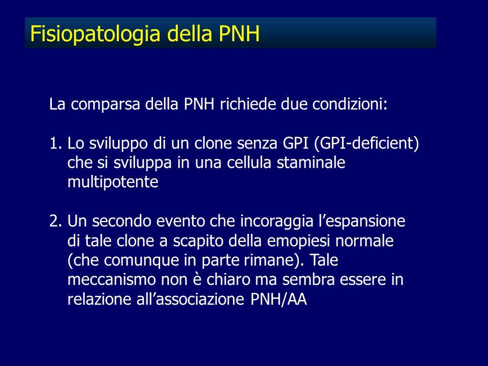 Fisiopatologia della PNH La comparsa della PNH richiede due condizioni: 1.Lo sviluppo di un clone senza GPI (GPI-deficient) che si sviluppa in una cel