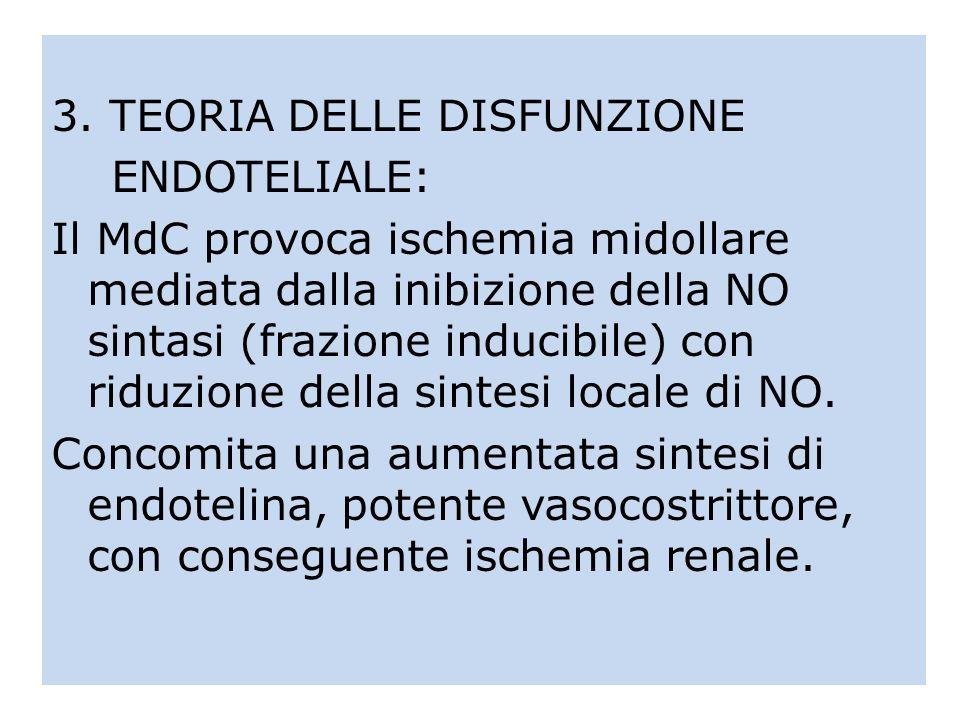 3. TEORIA DELLE DISFUNZIONE ENDOTELIALE: Il MdC provoca ischemia midollare mediata dalla inibizione della NO sintasi (frazione inducibile) con riduzio