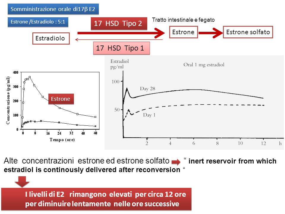 Estradiolo Estrone 17 HSD Tipo 2 17 HSD Tipo 1 Estrone Tratto intestinale e fegato I livelli di E2 rimangono elevati per circa 12 ore per diminuire le
