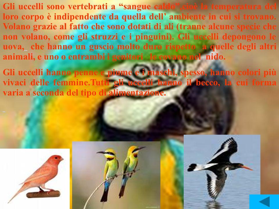 Gli uccelli sono vertebrati a sangue caldo,cioè la temperatura del loro corpo è indipendente da quella dell ambiente in cui si trovano. Volano grazie
