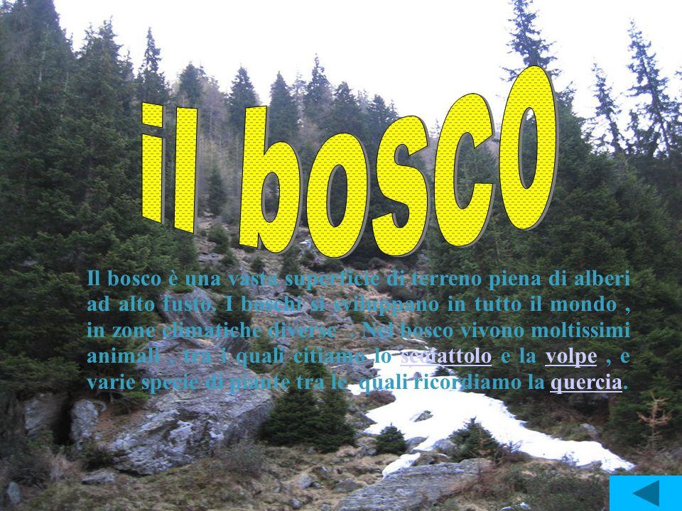 Il bosco è una vasta superficie di terreno piena di alberi ad alto fusto. I boschi si sviluppano in tutto il mondo, in zone climatiche diverse. Nel bo