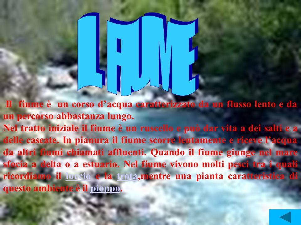 Il fiume è un corso dacqua caratterizzato da un flusso lento e da un percorso abbastanza lungo. Nel tratto iniziale il fiume è un ruscello e può dar v