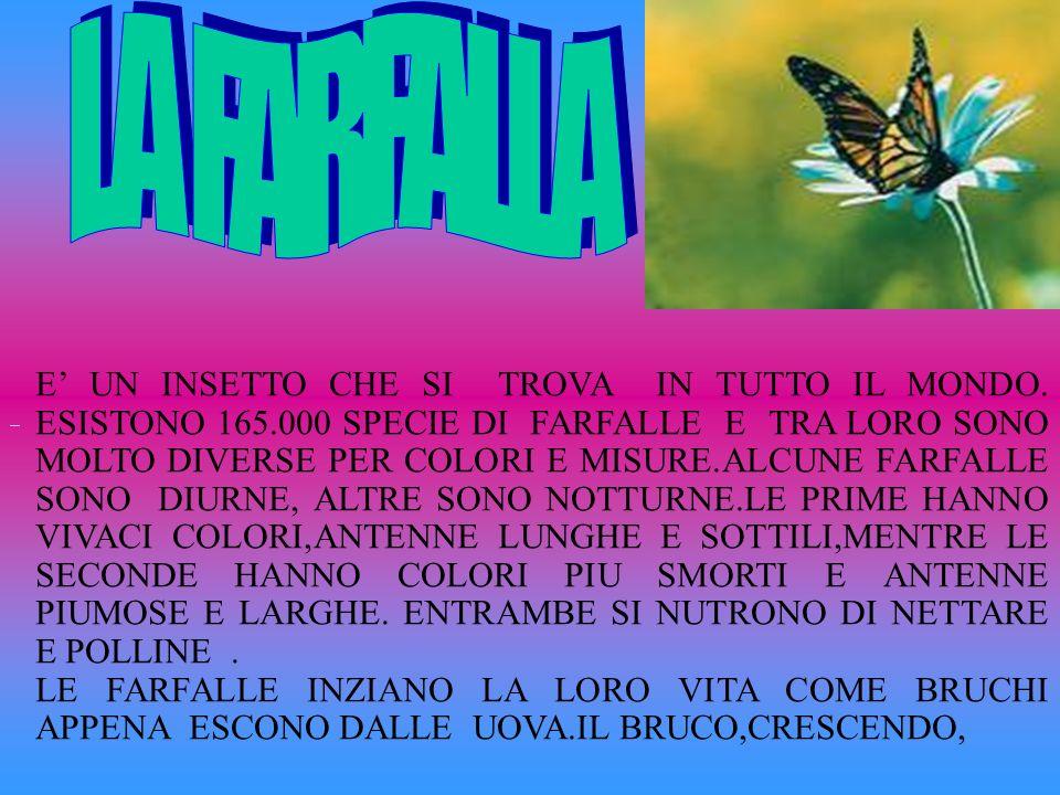 Il Germano reale è un uccello che in Italia viene anche chiamato Capoverde.