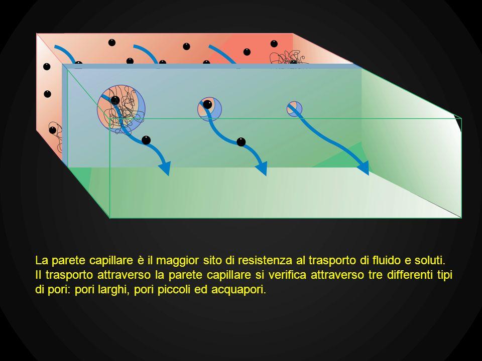 La parete capillare è il maggior sito di resistenza al trasporto di fluido e soluti. Il trasporto attraverso la parete capillare si verifica attravers