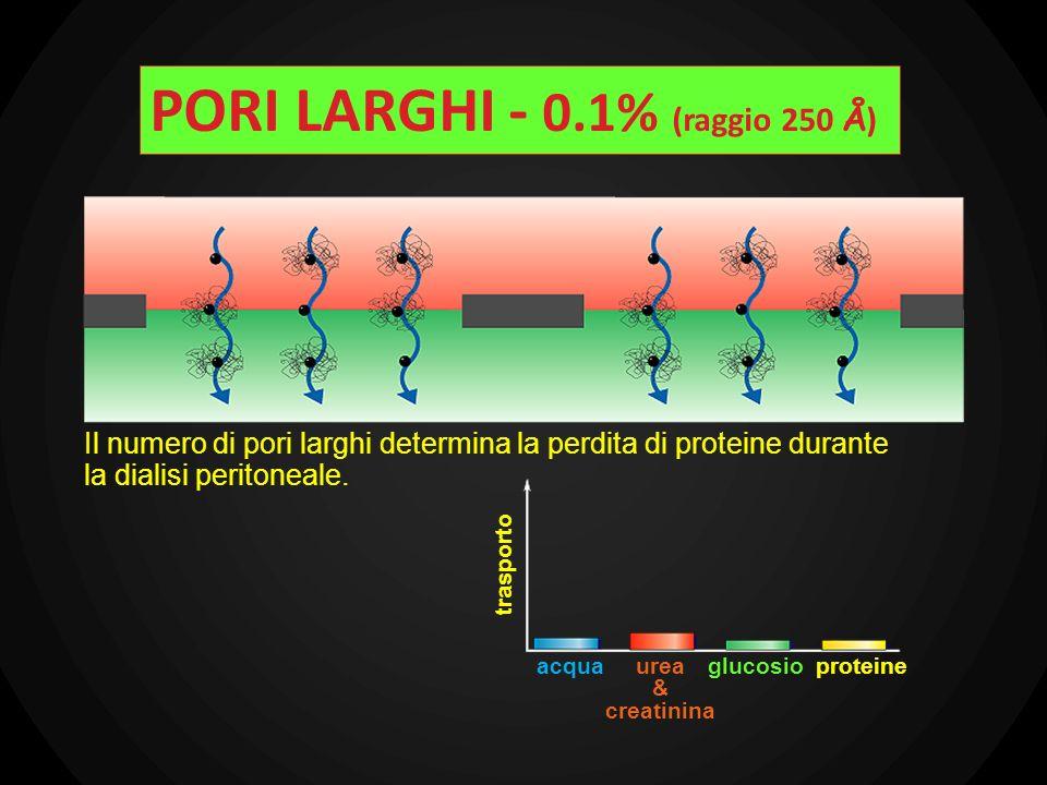 Il numero di pori larghi determina la perdita di proteine durante la dialisi peritoneale. trasporto acquaurea & creatinina glucosioproteine PORI LARGH
