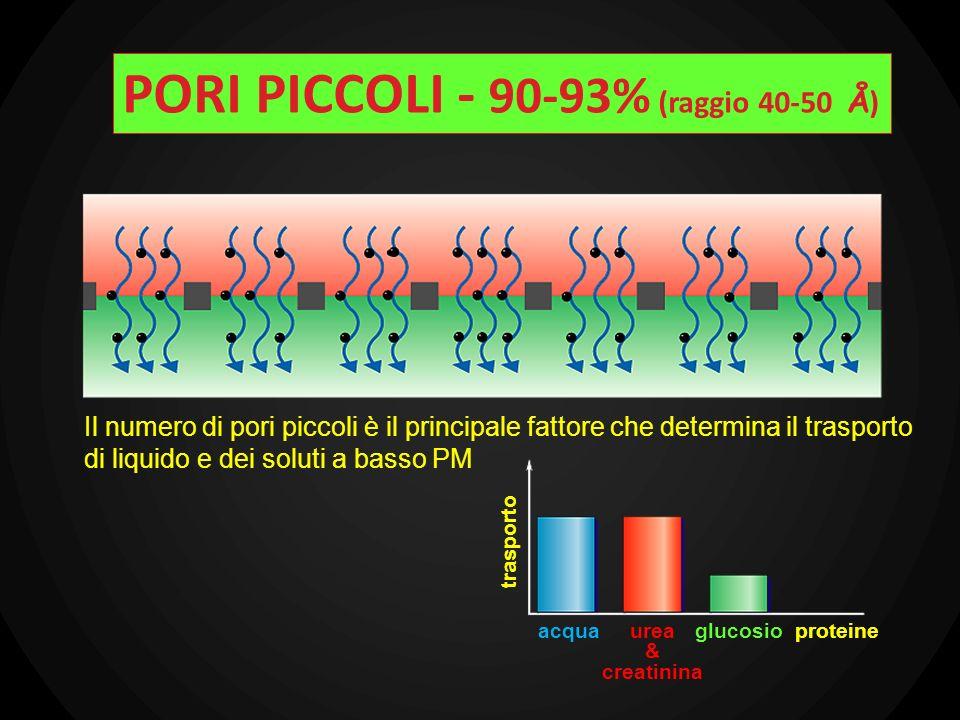 Il numero di pori piccoli è il principale fattore che determina il trasporto di liquido e dei soluti a basso PM trasporto acquaurea & creatinina gluco